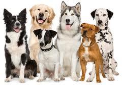 Canine Buddies