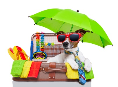 summer holiday dog